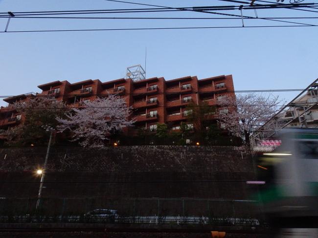 DSC01872+1.JPG